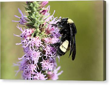 Life Of A Bee Canvas Print by Laura Oakman