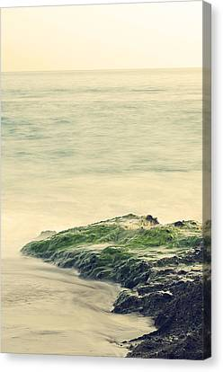 Life On The Rocks Canvas Print by Clayton Taylor