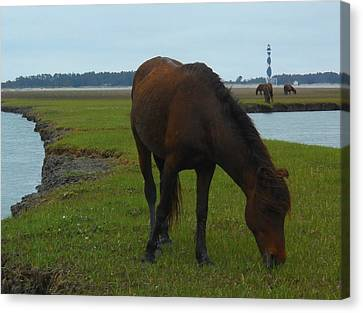 Life Without Fences Canvas Print by Jeff Moose