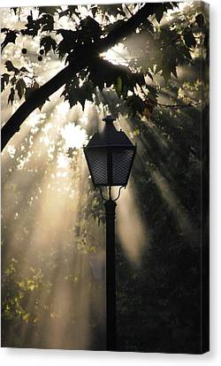 Canvas Print featuring the photograph Light by Amee Cave