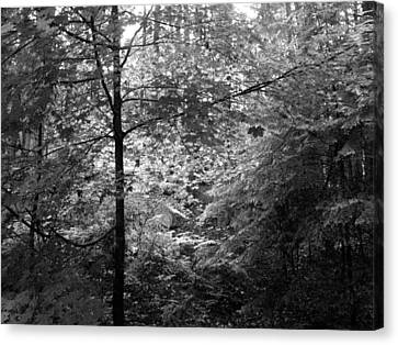 Light In The Woods Canvas Print by Kathleen Grace