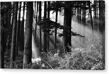 Canvas Print featuring the photograph Light Through The Trees by Don Schwartz