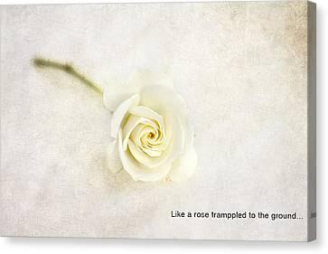 Like A Rose... Canvas Print by Taschja Hattingh