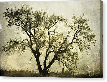 Likeable  Elm Canvas Print by Empty Wall