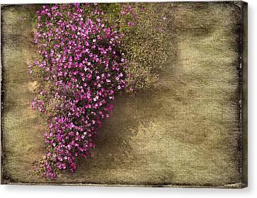 Lilac Branch Canvas Print by Svetlana Sewell