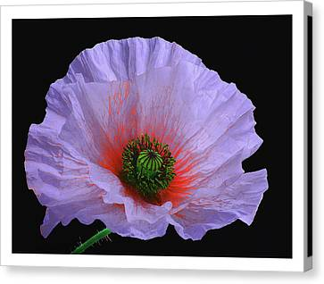 Lilac Poppy Canvas Print by A. McKinnon Photography