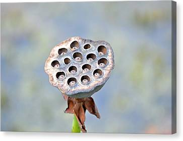 Canvas Print featuring the photograph Lili Pod 2 by Teresa Blanton