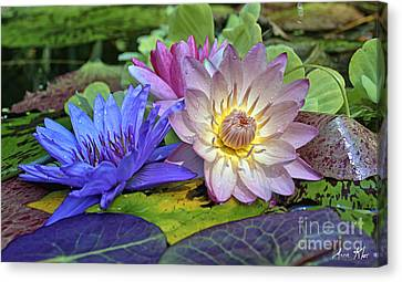 Lilies No. 30 Canvas Print by Anne Klar