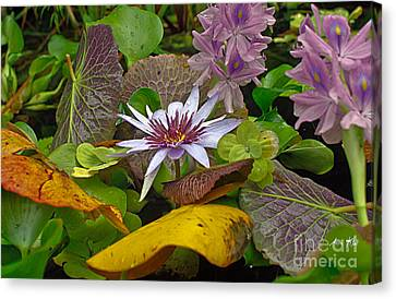 Canvas Print featuring the photograph Lilies No. 35 by Anne Klar
