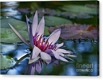 Canvas Print featuring the photograph Lilies No. 40 by Anne Klar