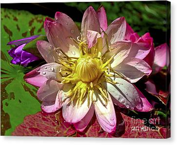 Canvas Print featuring the photograph Lilies No. 42 by Anne Klar