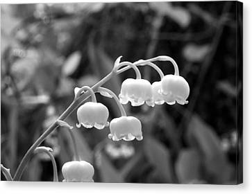 Lilies-of-the-valley Canvas Print