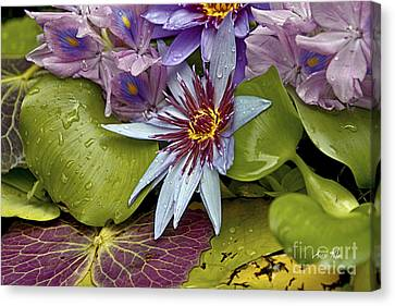 Lillies No. 9 Canvas Print by Anne Klar