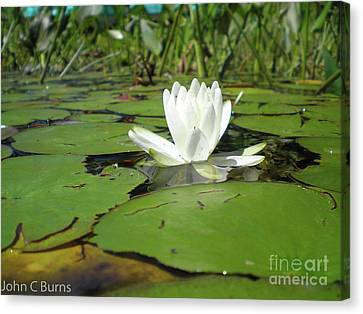 Canvas Print featuring the photograph Lilly by John Burns
