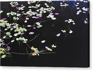Lilly Pads Canvas Print by Andres LaBrada