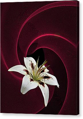 Canvas Print featuring the photograph Lilly White by Judy  Johnson
