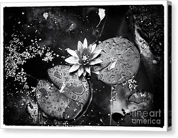 Canvas Print featuring the photograph Lily At Camley Street I by Jack Torcello