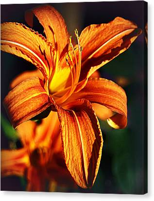 Lily At Sunset Canvas Print by Bogdan M Nicolae