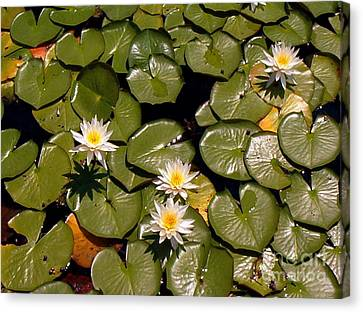 Canvas Print featuring the painting Lily Blooms by Gretchen Allen