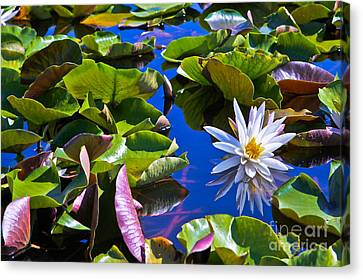 Canvas Print featuring the photograph Lily by Lawrence Burry