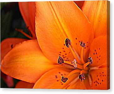 Canvas Print featuring the photograph Lily Lily by Bob Whitt