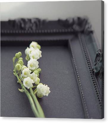 Lily Of The Valley Canvas Print by Yuliyart@gmail.com