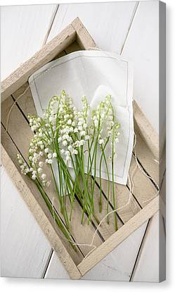 Lily Of Valley Canvas Print by Yuliyart@gmail.com