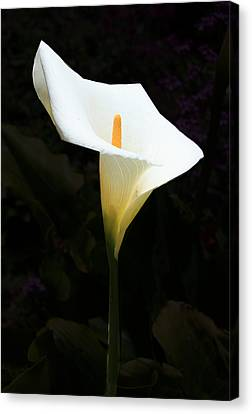 Canvas Print featuring the photograph Lily On Black by Nareeta Martin