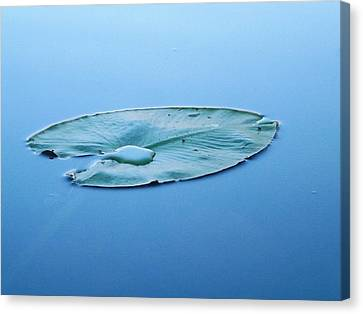 Lily Pad In The Sky Canvas Print by Gerald Strine
