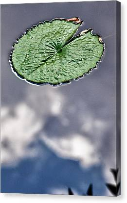 Lily Pad Canvas Print by Robert Ullmann