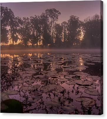 Canvas Print featuring the photograph Lily Pads In The Fog by Dan Wells