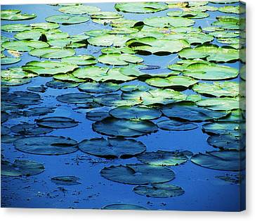 Lily Pads -one Canvas Print by Todd Sherlock