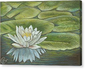 Lily Pads Canvas Print by Stephanie L Carr
