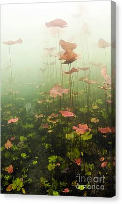 Lily Pads Underwater In Cenote Canvas Print
