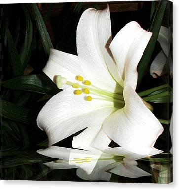 Lily Reflection Canvas Print by Pamela Hyde Wilson