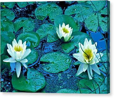 Lily Three Canvas Print by Debra     Vatalaro