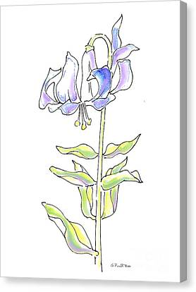 Lily Watercolor Drawing 5 Canvas Print