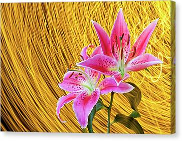 Lily With Light Trails Canvas Print by H Matthew Howarth [flatworldsedge]