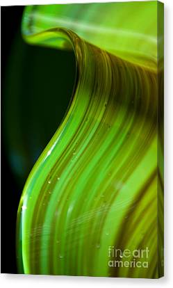 Lime Curl Ll Canvas Print by Dana Kern