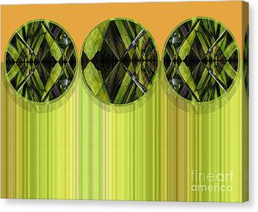 Lime Delight Canvas Print by Ann Powell
