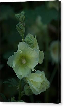 Canvas Print featuring the photograph Lime by Joseph Yarbrough