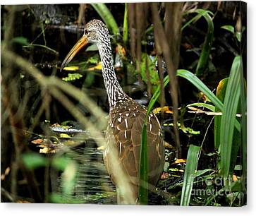 Limpkin Canvas Print by Theresa Willingham