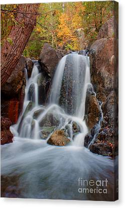 Lincoln Creek Canvas Print by Jamie Rabold