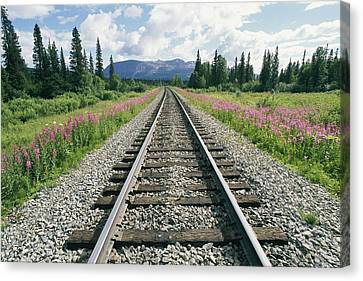 Lined On Either Side By Pink Fireweed Canvas Print by Rich Reid