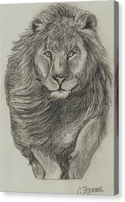 Lion Canvas Print by Christy Saunders Church