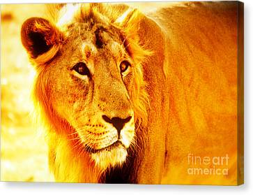 Lion Canvas Print by Nilay Tailor
