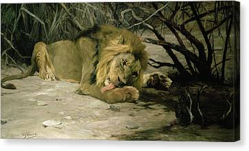 Lion Reclining In A Landscape Canvas Print by Wilhelm Kuhnert