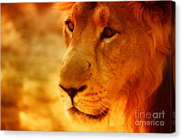 Lion The King Canvas Print by Nilay Tailor