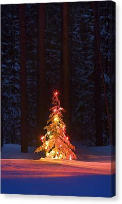 Lit Christmas Tree In A Forest Canvas Print by Carson Ganci