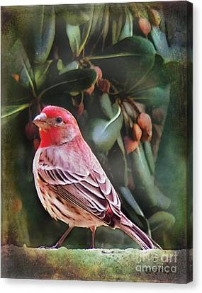 Little Bird Iv Canvas Print by Rhonda Strickland